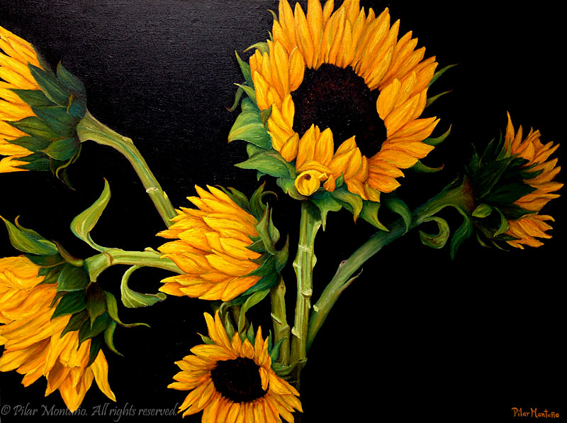 "Sunflowers II | Oil on Canvas | 36"" x 48"""